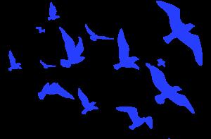 ocells blau